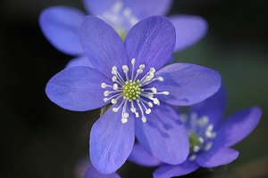 bereavement and the stages of grief blue flower
