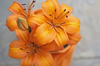 pre planning cremation for New York City cremation services orange flowers