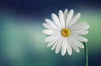 what are the benefits of direct cremation daisy photo